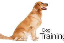 For dogs & cats lovers - useful information / Training, nutrition, all you need to find out for your furry friends