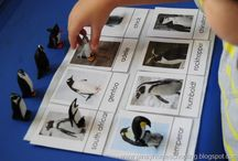 Montessori Antarctica / by C Montessori