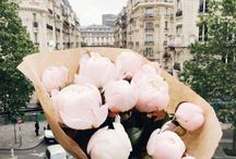 F L O W E R S / 꽃 flowers