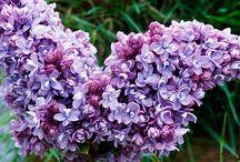 Flower of the week / Each week we upload a flower of the week.