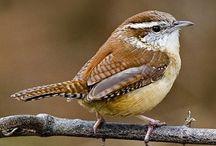 Birds - Part 2 of 2 / by Debra Mikalauskas