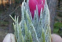 Kaktusy, sukulenty