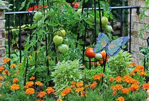 Kitchen garden / Ideas for growing my own veggies, fruits and herbs on the patio