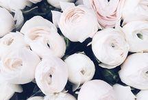 Blooming Beautiful / ~ In Bloom ~