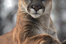 Beautifull Animals
