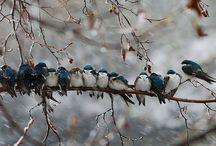 _birds_