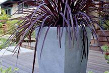 plant-grass
