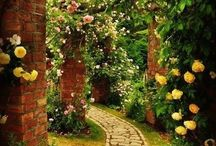 Flowers and walkway
