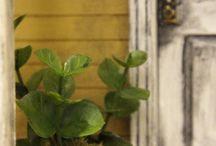 Nukkekodin kasvit