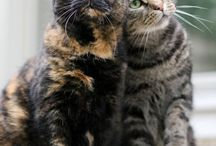 lovely torties
