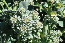 Our Blog : Organics, Lawn Care, Garden Tips & more!