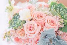 Fleurs / Fleurs, plantes, arbres, bouquet...