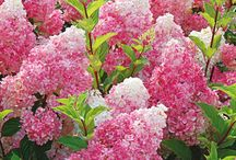 Pink flowers & plants
