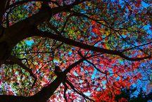 Colors & Creativity