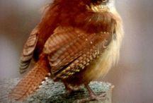 Magical Birds