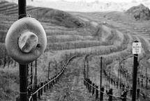 Napa Wine Country / #America's #Bordeaux. #Premier #WineRegion where #CabernetSauvignon is #King.