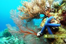 Explore Takabonerate [operator : Putri Yulia Indriana ] / Explore Takabonerate - Atol Terbesar Ke3 Di Dunia October 31 - November 5, 2013 Selayar Link : http://triptr.us/tu