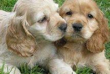 perritos/as