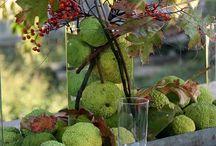Couleurs d automne / Charmes  de l automne