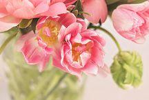 C*Pink romantic ももいろといき / 桃色吐息