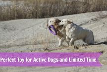 Dog Toys / Here are a great collection of dog toys to keep your dog happy and active.