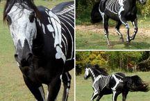 HORSES <3