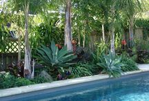 Mill  Valley Apartments. / Client has three apartment buildings that need updating.  Swimming pool with fun drought tolerant tropical poolside look...