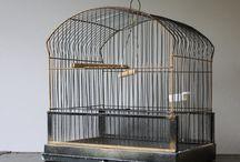 Home - Bird Ideas / by Grace Bartlett