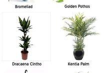 Växter hemma