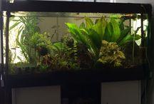 Aquarium / Süßwasseraquarium