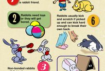 My kids want a pet rabbit / by Melanie Smith
