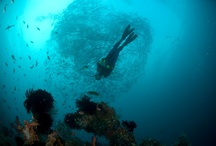 Scuba dive / Underwater