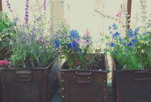garden / by Dianna