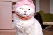 .:CAT:LOVE:.