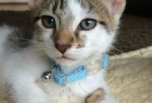 Elvis / Elvis is our loving, caring, gorgeous kitten who loves to sleep, eat, play and get up to mischief!