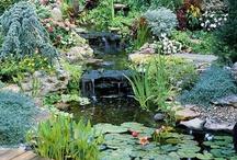 Beautiful Gardens / A Selection of Beautiful Garden from across the Globe.