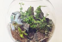 Terrarium pieces of universe / Houses for plants n stuff