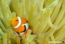 """Filipinas / Considerada berçário natural, lar de pelo menos 200 espécies ameaçadas de extinção, a barreira de corais nas Filipinas é uma bomba relógio prestes a explodir. Pesca predatória e eventos naturais extremos, como o supertufão Haiyan, ameaçam a formação natural de 130 km de extensão. A exposição de fotos internacional """"Expedition: Danajon Bank"""" busca conscientizar a respeito dessa preocupante realidade: http://abr.ai/1qf8Lqr"""