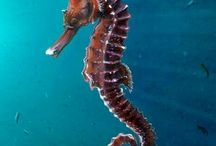 Fabulous water denizens...*** SEA HORSES ***