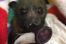 Bat baby