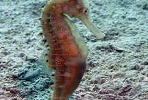 animales marinos / vida en el mar