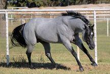 Horses / by Meagan Murff