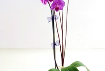 Orchid Gardening, Growing & Care