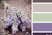 Color Lavanda & Co