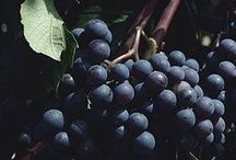 Fruit and Nuts, Growing, Harvesting, Storage  / by Patty Taylor