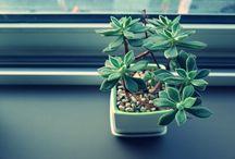 Pflanzen fürs Haus