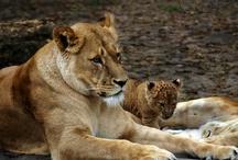 love the animals! / by Cheryl Scher