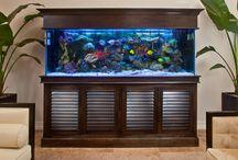 Rent Aquarium best
