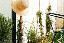My garden project