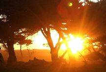 Asilomar State Beach / by CA State Parks